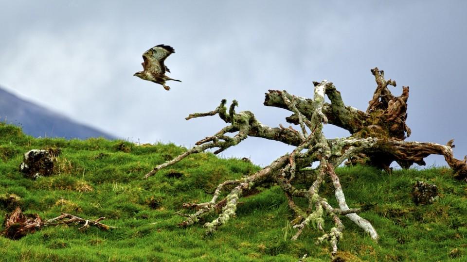 wild azores image 5